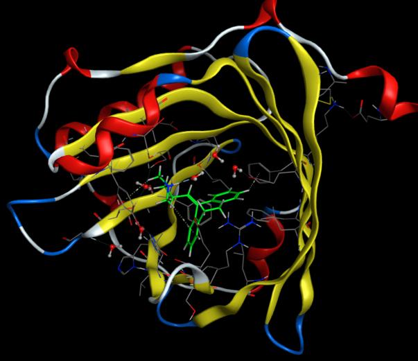 Distribution And Plasma Protein Binding