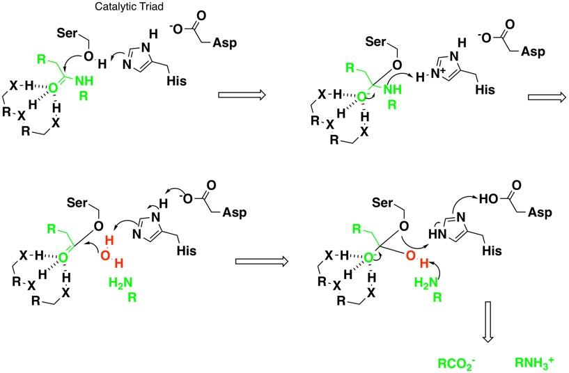 Serine Protease Inhibitors | Cambridge MedChem Consulting